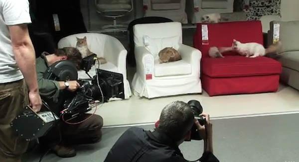 100 mačaka testira nameštaj IKEA