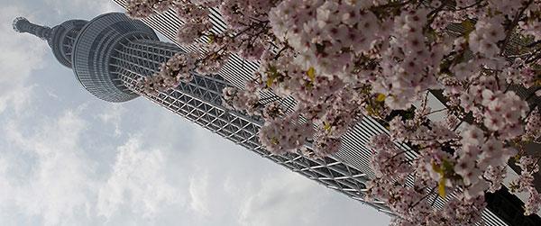 Tokio Skytree: otvoren najviši toranj na svetu