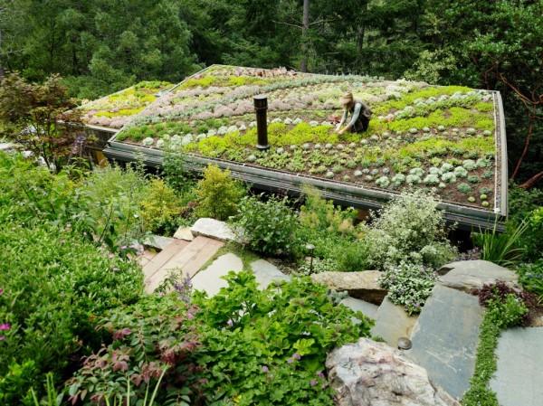 Zeleni krovovi   Zeleni-krovovi-7