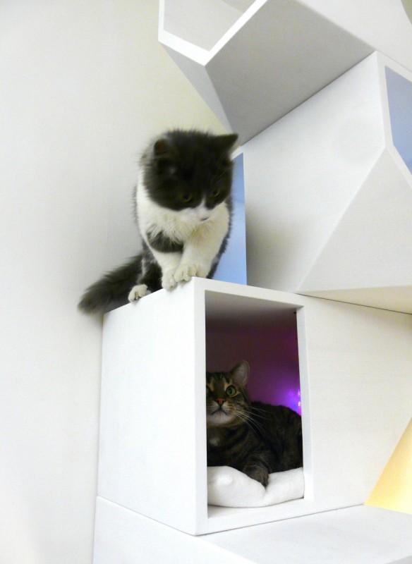 Kuća za mačke na četiri sprata