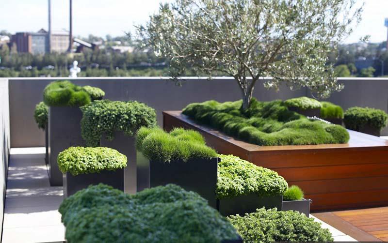 terasa-zelenilo