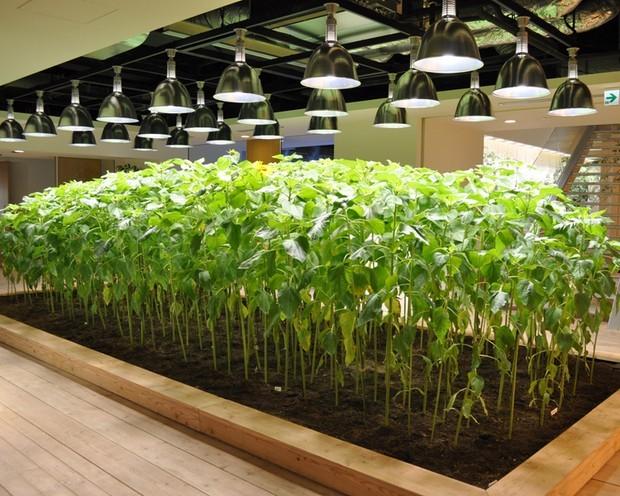 Samo u Japanu: Bašta u kancelarijskom prostoru