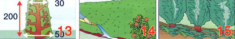odrzavanje-zive-ograde