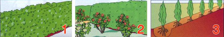 sadnja