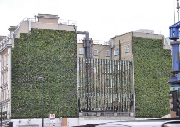 zeleni-zid-2