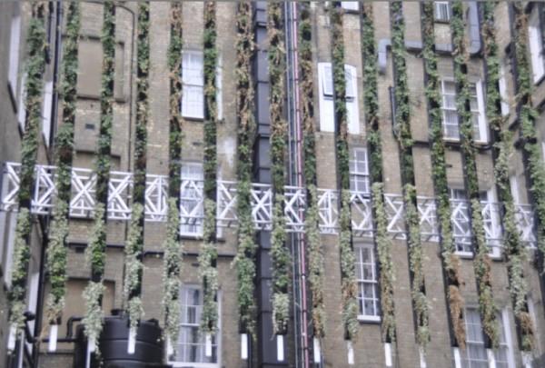 zeleni-zid-3