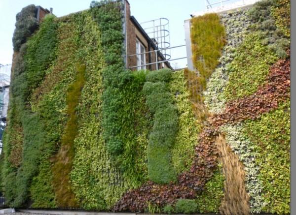zeleni-zid-5