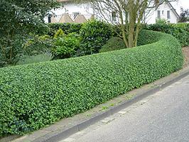 ziva ograda