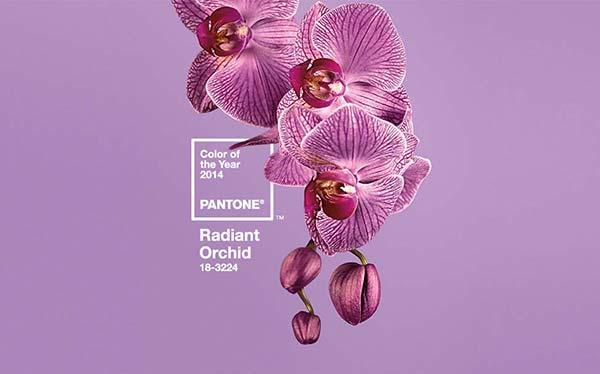 Boja orhideje je boja godine 2014.