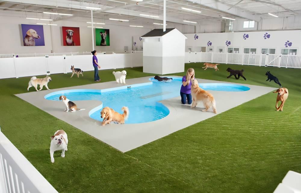 Gradi se luksuzni terminal za kućne ljubimce na aerodromu u Njujorku