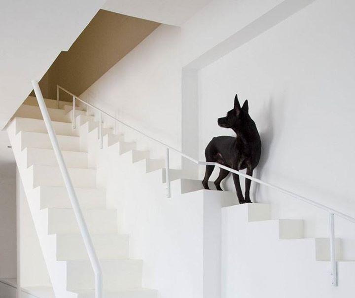 Kuća s posebnim stepeništem za kućne ljubimce