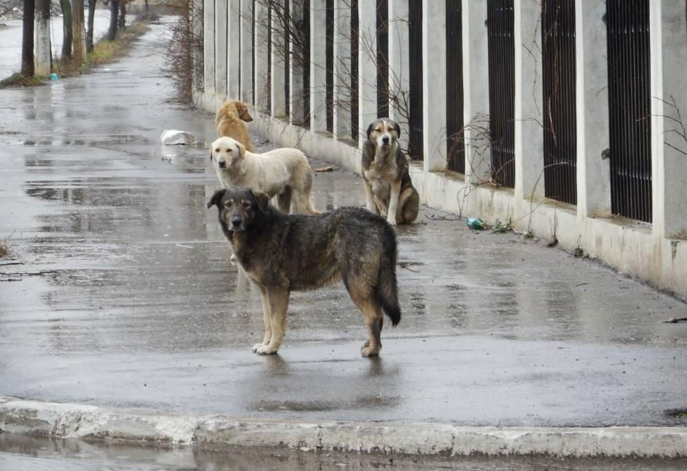 Beograd pravi Park za pse i groblje za kućne ljubimce
