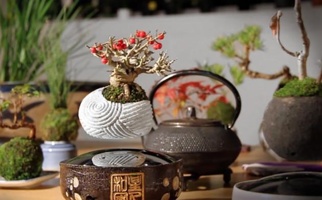 Lebdeci bonsai 03
