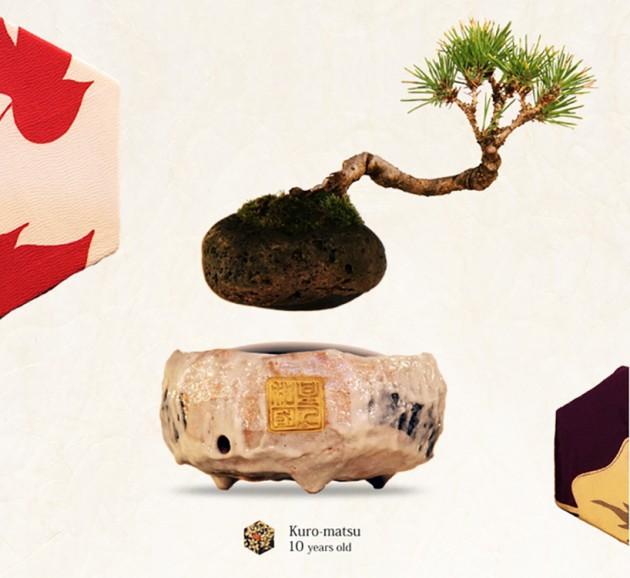 Lebdeci bonsai 04