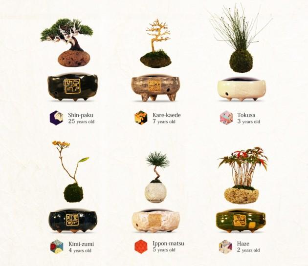 Lebdeci bonsai 05