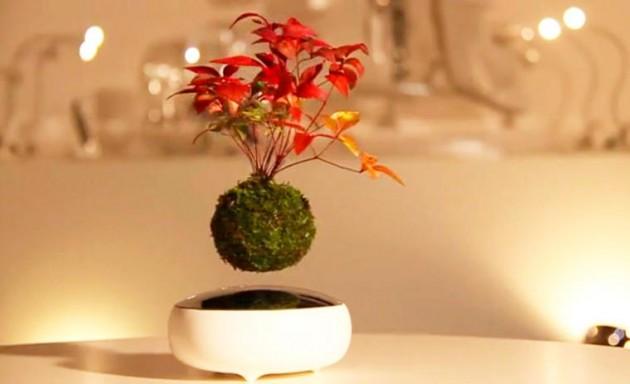 Lebdeci bonsai