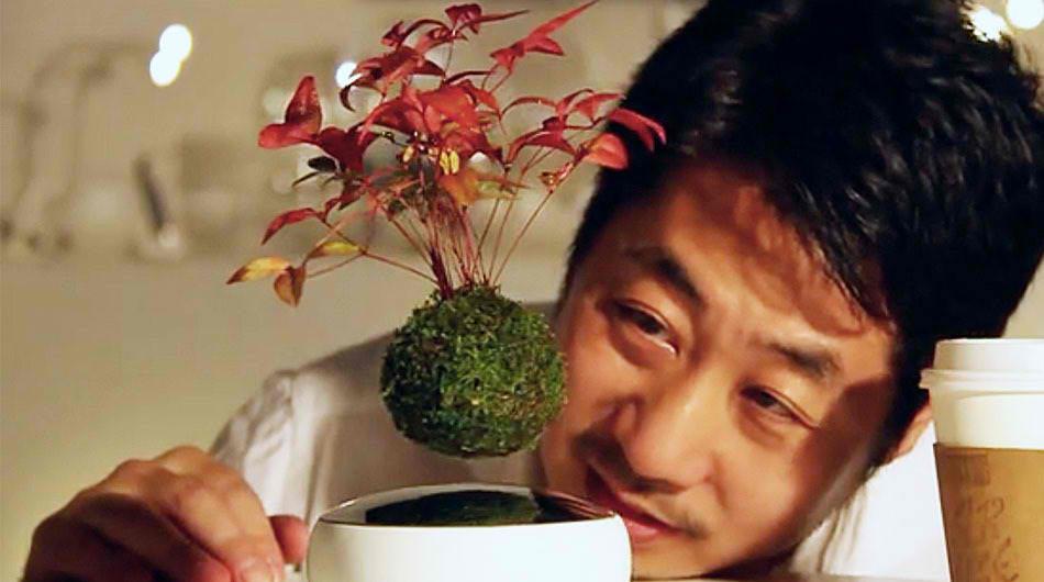 Lebdeći bonsai: Nova dinamična vrsta vegetativne dekoracije