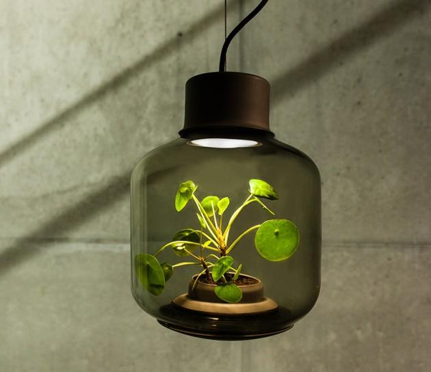 Biljka u lampi 06