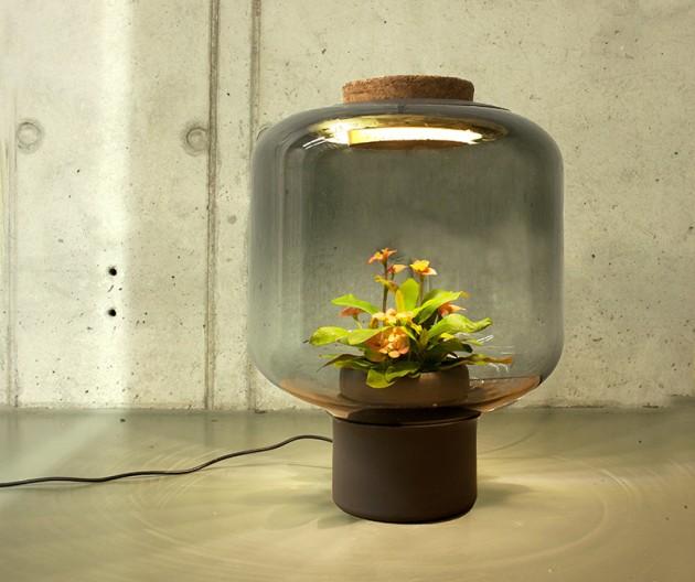Biljka u lampi 07