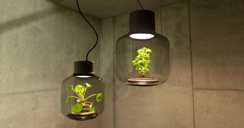 Lampe koje pomažu biljkama da rastu i u sobi bez prozora