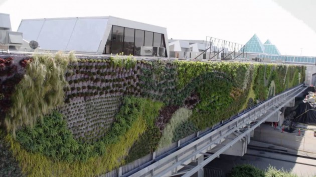Najveci zeleni zid u Severnoj Americi 05