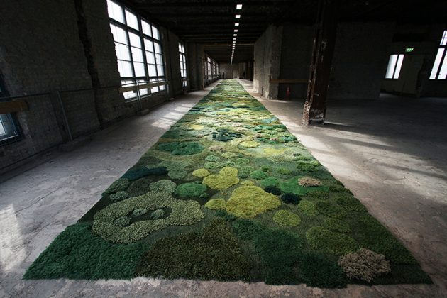 Tepih od 145 kvadratna metra 08