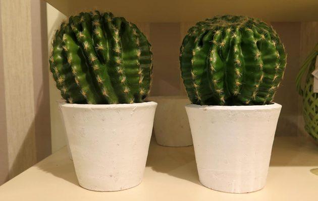 vestacki-kaktusi