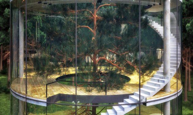 kuca-oko-drveta-05