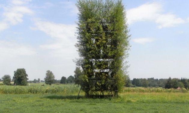 Baubotanik-living-architecture-10-1020x610