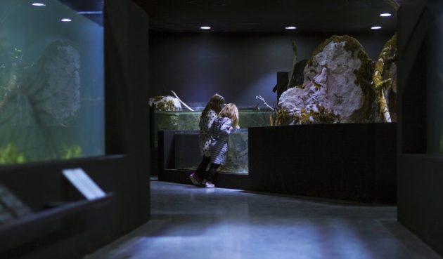 karlovac-podzemni-akvarijum-06