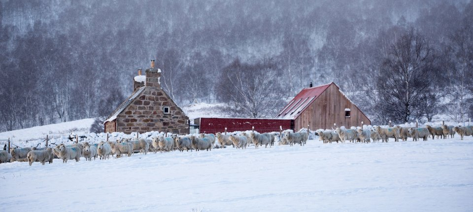 Moderna adaptacija kuće u škotskim brdima