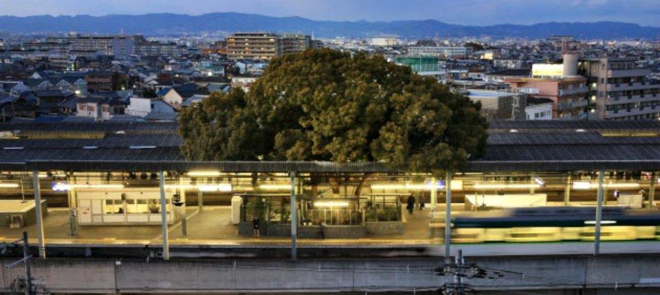 Železnička stanica u Japanu sagrađena oko drveta starog 700 godina