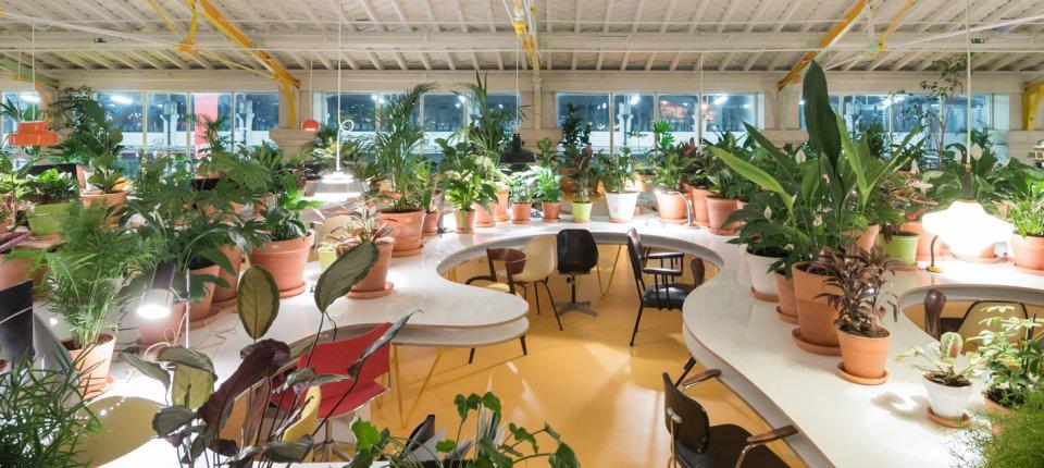 Nije cvećara: 1.000 biljaka za kvalitetniji rad u open-space kancelariji