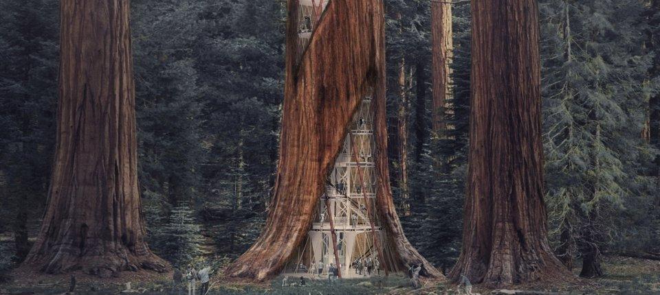 Hoćemo li nebodere graditi unutar visokih drveća?