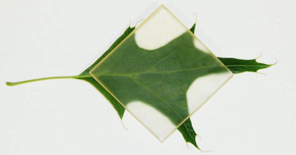 Providno drvo: Materijal koji bi mogao da promeni građevinarstvo
