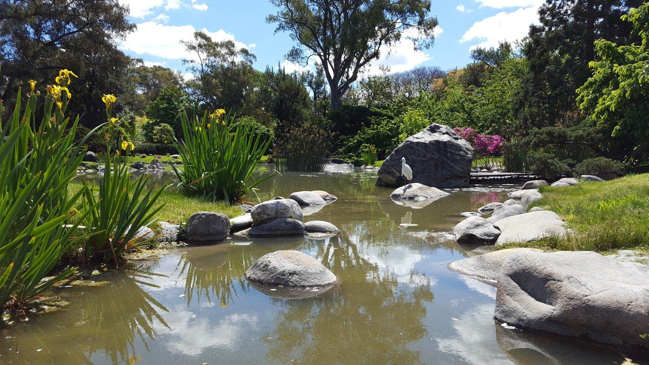Novi Sad dobija prvi japanski park s fontanom