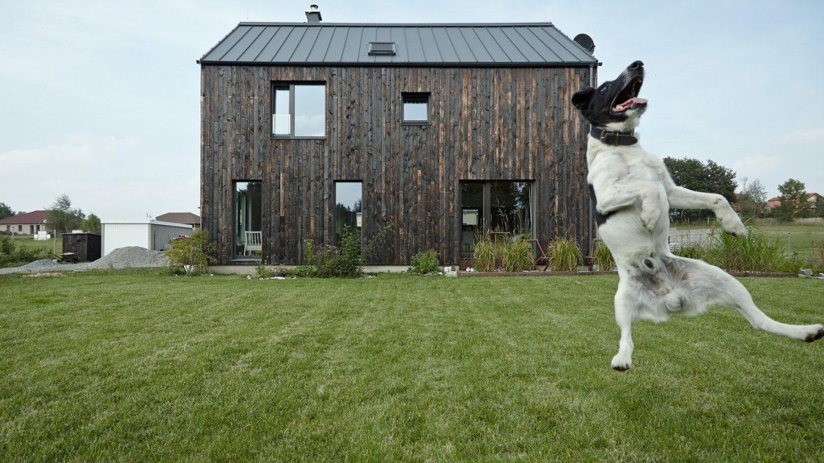10 fotografija koje dokazuju da najbolja arhitektura ide uz najboljeg čovekovog prijatelja