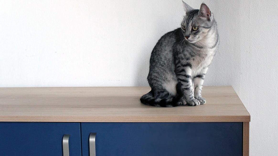 Praktičan nameštaj za mačke iz domaće radinosti