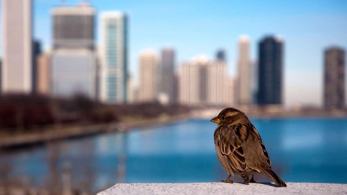 Neboderi u Americi krivi su za stradanje miliona ptica godišnje