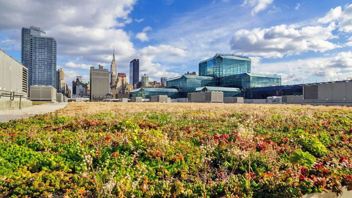 Zeleni krovovi na novim objektima u Njujorku postaju obavezni po zakonu